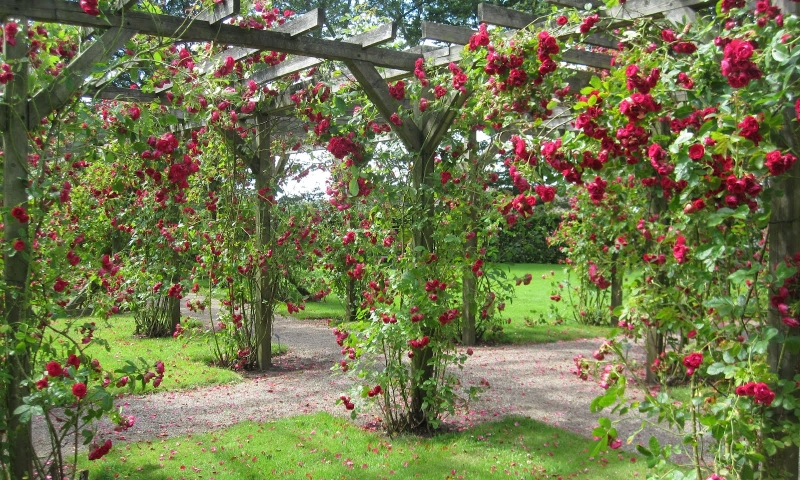 Wymarzony różany ogród